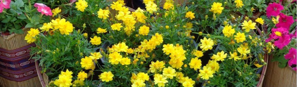 Diane Mumm Garden Videos